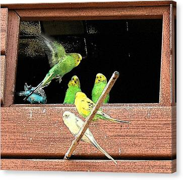 Parakeet Flutter Canvas Print by Ellen O'Reilly