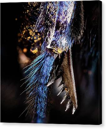 Parasitic Bee Tibial Spur Canvas Print by Us Geological Survey