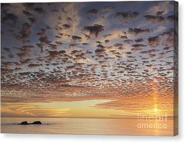 Paratroopers Canvas Print by Michele Steffey