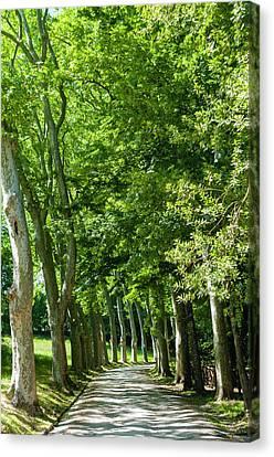 Park And Garden Of Villa Demidoff Canvas Print by Nico Tondini