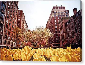 Park Avenue In The Spring  Canvas Print by Vivienne Gucwa