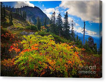 Park Butte Fall Color Canvas Print by Inge Johnsson