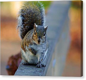 Canvas Print featuring the photograph Park Squirrel I by Daniel Woodrum