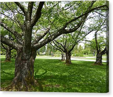 Canvas Print featuring the photograph Park Trees by Laurie Tsemak
