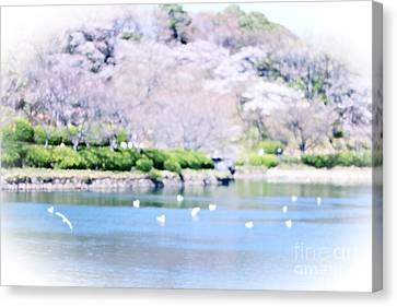 Park With Pond And Cherry Blossoms In Spring Canvas Print by Beverly Claire Kaiya