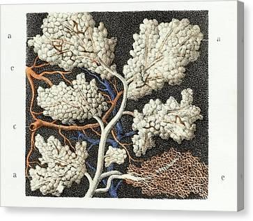 Parotid Salivary Gland Canvas Print by Science Photo Library