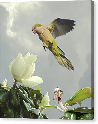 Quaker Canvas Print - Parrot And Magnolia Tree by IM Spadecaller