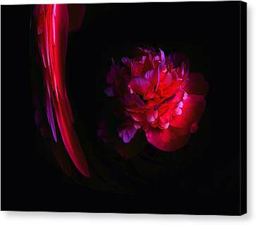 Parrot And Paeony Illusion Canvas Print