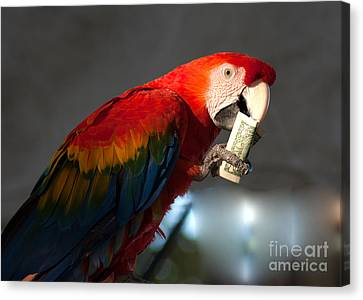 Canvas Print featuring the photograph Parrot Eating 1 Dollar Bank Note by Gunter Nezhoda