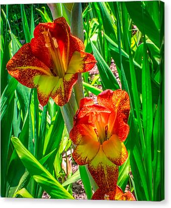 Canvas Print featuring the photograph Parrot Gladiolus by Rob Sellers