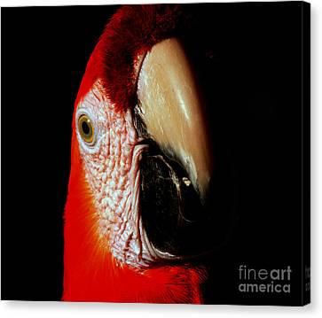 Canvas Print featuring the photograph Parrot by Gunter Nezhoda