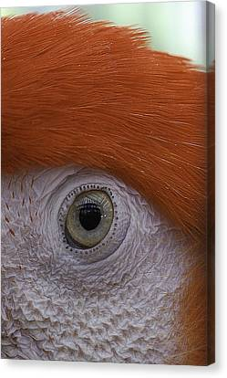 Parrot In Greenhouse No.1 2013 Canvas Print