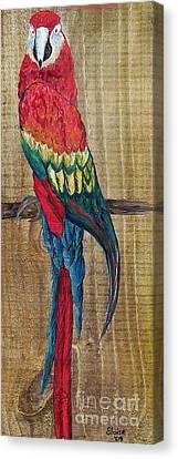 Parrot - Scarlet Macaw Canvas Print by Eloise Schneider