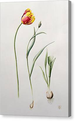 21st Century Canvas Print - Parrot Tulip by Iona Hordern