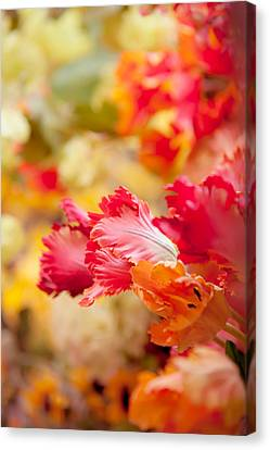 Parrot Tulips 1. Amsterdam Flower Market Canvas Print