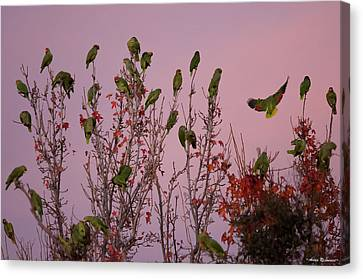 Parrots At Roost Canvas Print by Avian Resources