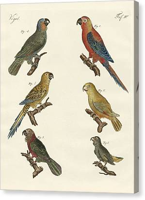 Macaw Canvas Print - Parrots Of The New World by Splendid Art Prints