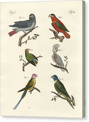Parrots Of The Old World Canvas Print