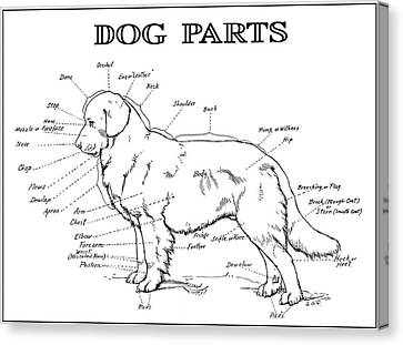 Parts Of A Dog 2 -- 1919 Canvas Print