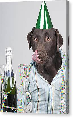 Party Animal Canvas Print by Justin Paget