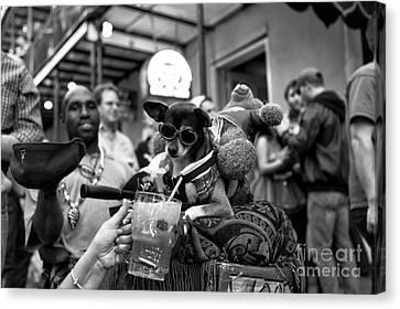 Party Dog On Bourbon Street Mono Canvas Print