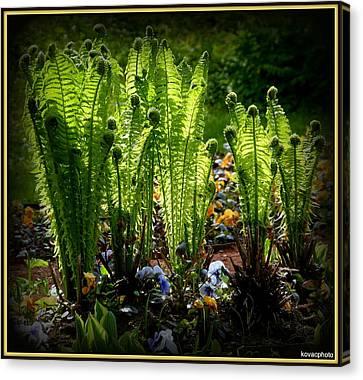 Party Ferns Canvas Print by David Kovac