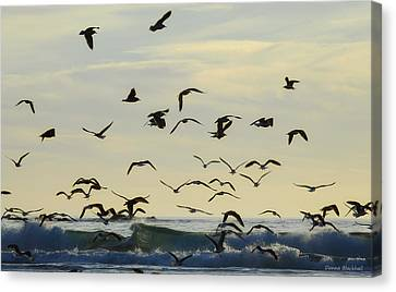 Party Is Over Canvas Print by Donna Blackhall