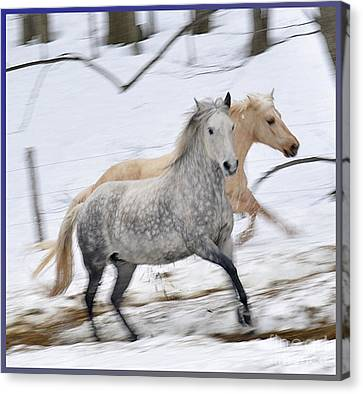 Paso Fino Mares Take Flight Canvas Print by Patricia Keller