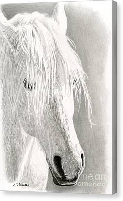 Horse Stable Canvas Print - White Horse- Paso Fino by Sarah Batalka