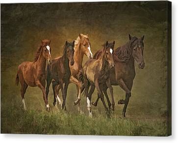 Canvas Print featuring the photograph Paso Peruvians by Priscilla Burgers