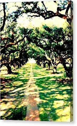 Canvas Print featuring the photograph Passage Through The Shadows At Oak Alley by Michael Hoard