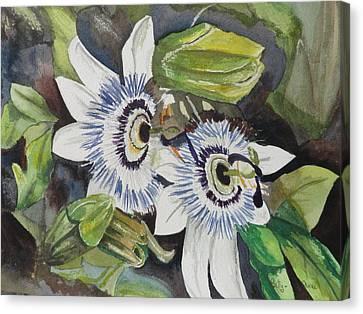 Passiflora Canvas Print - Passiflora Cerulia by Betty-Anne McDonald