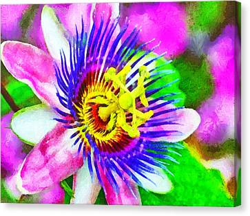 Passiflora Edulis Otherwise Known As Passion Flower Canvas Print by Digital Photographic Arts