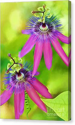 Passiflora Piresii Vine  - Passiflora Twins Canvas Print by Michelle Wiarda