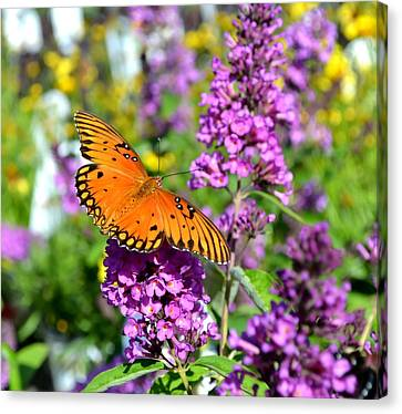 Canvas Print featuring the photograph Passion Butterfly by Deena Stoddard