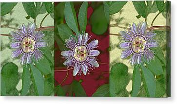 Canvas Print featuring the photograph Passion Flower Triptych by Tom Wurl