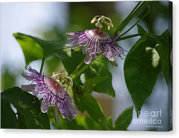 Canvas Print - Passion Flowers by Tannis  Baldwin