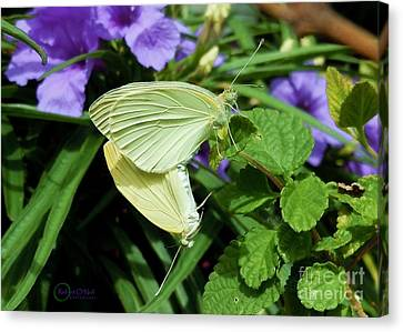 Passion Of The Butterflies Canvas Print by Robert ONeil
