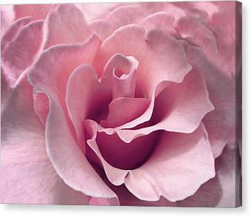Passion Pink Rose Flower Canvas Print by Jennie Marie Schell
