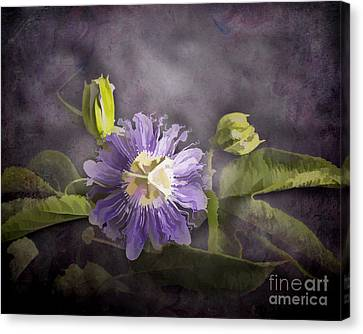 Passion Flower Canvas Print by TN Fairey