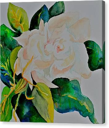 White Gardenia Canvas Print - Passionate Gardenia by Beverley Harper Tinsley