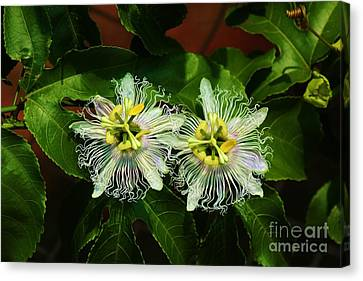 Passionate Pair Canvas Print by Craig Wood