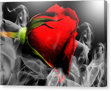 Passionate Red Hot Smoky Rose Canvas Print
