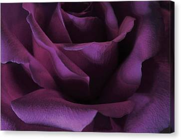 Passionately Canvas Print by The Art Of Marilyn Ridoutt-Greene