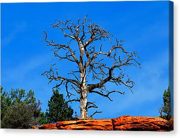 Canvas Print featuring the photograph Past Prime by Greg Norrell