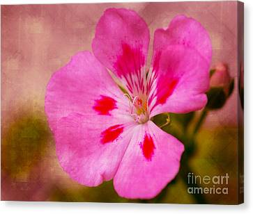 Pastel Beauty Canvas Print by Dave Bosse