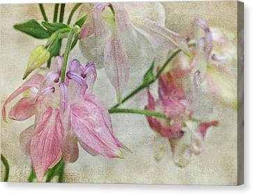 Canvas Print featuring the photograph Pastel Columbines by Peggy Collins