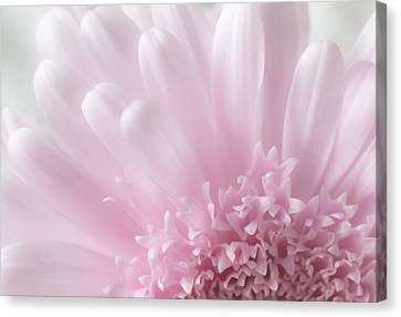 Pastel Daisy Canvas Print by Dale Kincaid