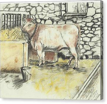 Cow In A Barn Canvas Print
