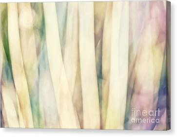 Pastel Forest Wild Grasses Photographic Abstract Canvas Print by Natalie Kinnear